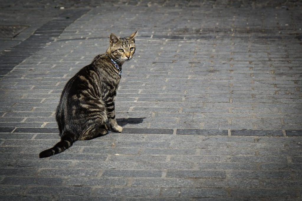 traceur gps pour chats