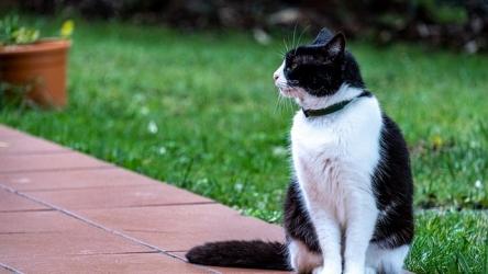 Comparatif des meilleurs colliers GPS pour chats