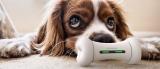 Wickedbone : LE premier jouet connecté pour chien